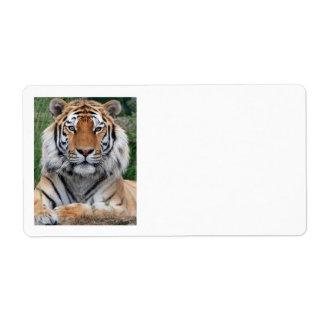 För fotoporträtt för tiger head härlig fraktsedel