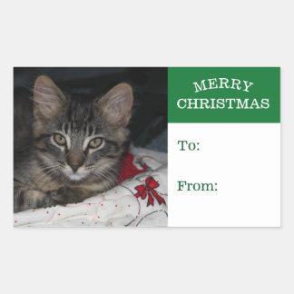 För god julgåva för mycket liten kattunge Caspian Rektangulärt Klistermärke