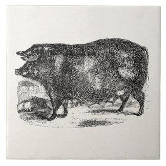 För grisPiglets för vintage inhemska djur för Kakelplatta