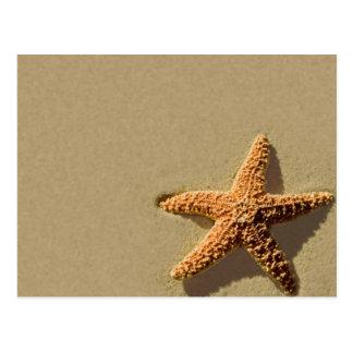 För händelsestrand för sjöstjärna tropisk inbjudan