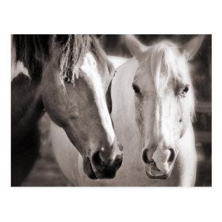 För hästSepia för vit brun häst Vykort