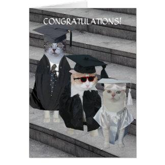 För katt-/kattungestudenten för anpassade roligt hälsningskort