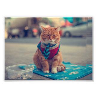 För kattsitta för Tie beige tiggeri Fototryck