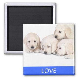 För Labrador Retreiver för kärlek gul magnet valpa