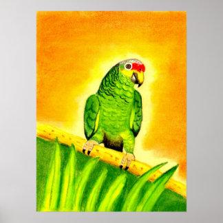 För Lored för amason rött porträtt för fågel papeg Affisch