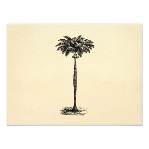 För öpalmträd för vintage tom tropisk mall fotografiskt tryck