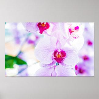 För Orchidvår för ljus makro purpurfärgad Poster