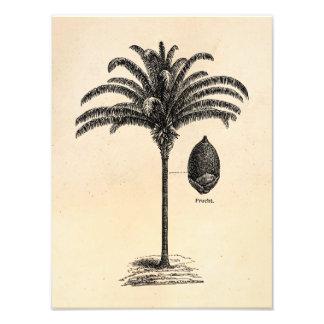 För palmträdmall för vintage Retro brasilianska ha Fototryck