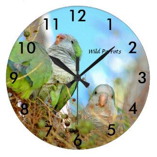 För Quakerpapegojor för vilden tar tid på den Stor Klocka