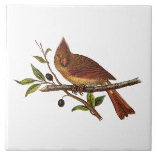 För sångfågel för vintage huvudsaklig illustration kakelplatta