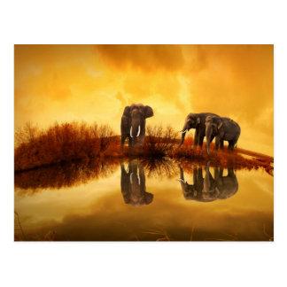 För solnedgångreflexion för elefant guld- vykort