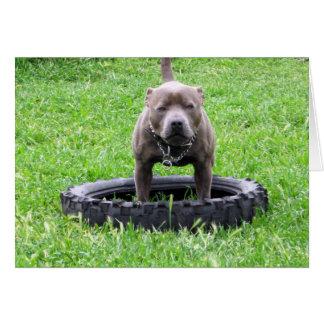 För Staffordshire för blått ung Terrier tjur, OBS Kort