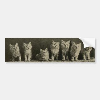 För Timey för vintage Retro gammala katter för Bildekal