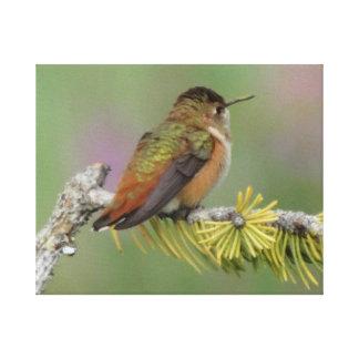 För tjock Hummingbird lite Canvastryck