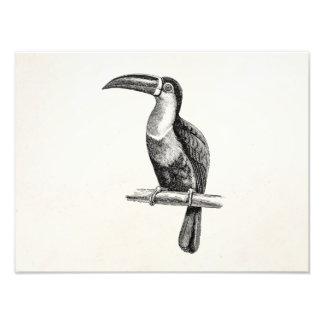För Toucan för vintage tropisk mall för Fototryck