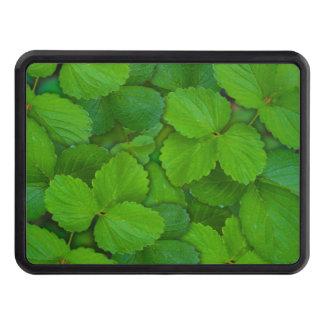 För Tulsi för helig basilika löv gröna Mint Skydd För Dragkrok