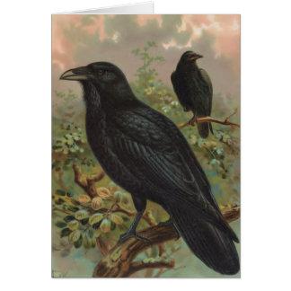För vintagefågel för allmänning den korpsvarta hälsningskort
