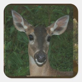 För ZooOrchid för hjort däggdjurs- djur roligt 99 Fyrkantigt Klistermärke