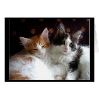 Förälskat hälsningkort för kattungar hälsningskort