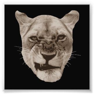 Förargad morra lejon katt fototryck