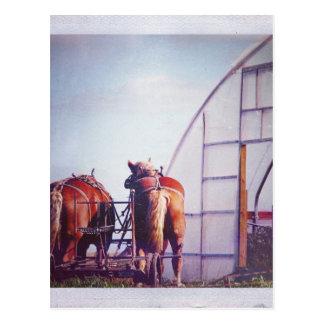 Formulera hästredot för arbete vykort
