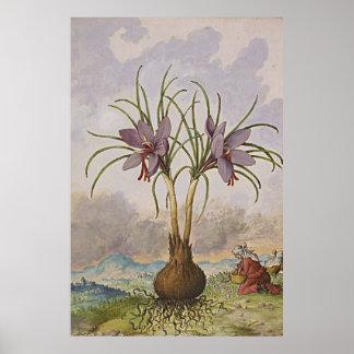 Forntida botanisk konstsaffran poster