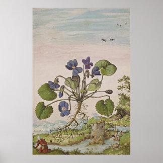 Forntida botanisk konstViola Poster