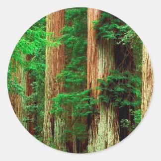 Forntida jätteredwoodträd för träd runt klistermärke