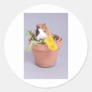 försökskanin i en blomkruka runt klistermärke