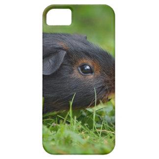 Försökskanin iPhone 5 Case-Mate Skal