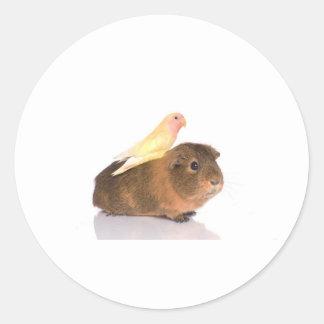 försökskanin och gultfågel runt klistermärke