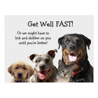 Förtjusande husdjur får den väl vykortet vykort