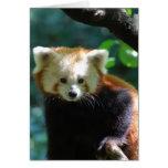Förtjusande rött Pandahälsningkort Hälsningskort