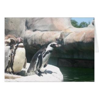 Förvirrade pingvin hälsningskort