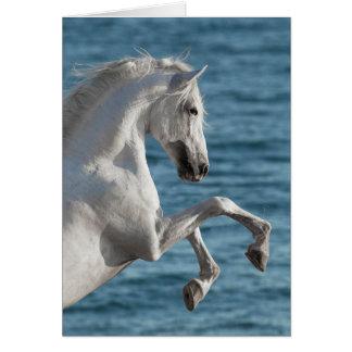 Fostra för havshäst - hästhälsningkort hälsningskort