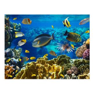Foto av en tropisk fisk på en korallrev vykort