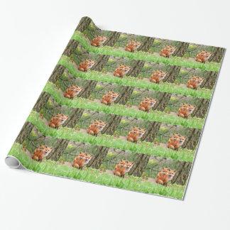 Foto av förtjusande röda rävsatser som tillsammans presentpapper