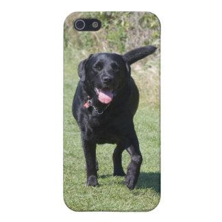 Foto för hund för svart för Labrador Retriever iPhone 5 Hud