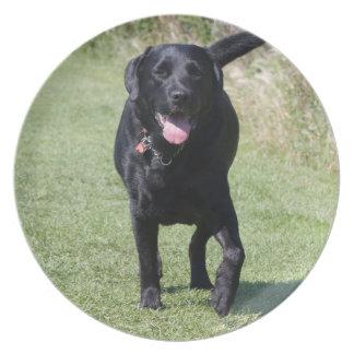 Foto för hund för svart för Labrador Retriever Tallrik