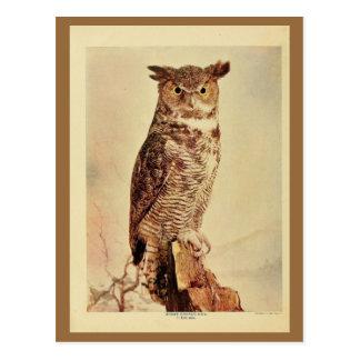 Foto för litho för färg för horned uggla för vykort