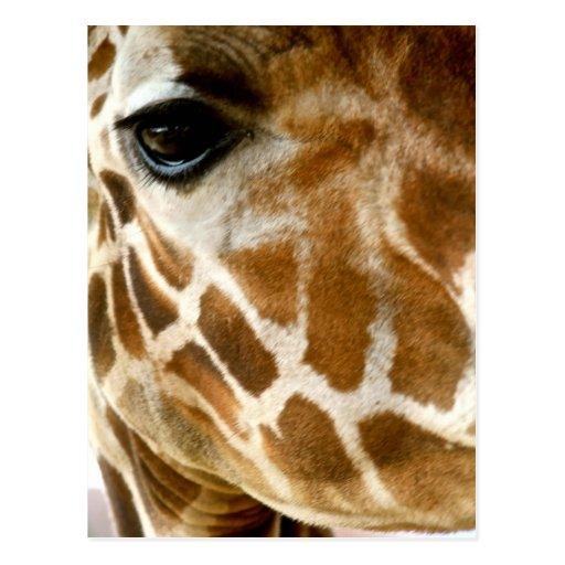Foto för natur för vilda djur för Closeupgiraffans Vykort