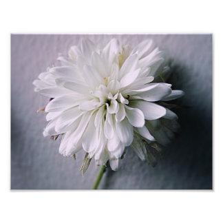 Foto för vitblom 8x5 (satäng)