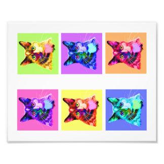 """Foto regnbåge-/vitkattporträtt för tryck 8x10"""""""