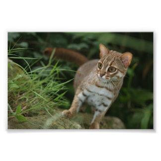 Foto - rostig prickig katt