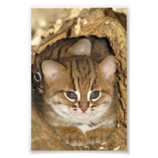 Foto - rostig prickig katt 2