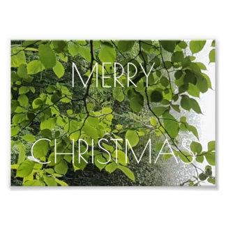 Fotografi för blommigt för god julträdvatten