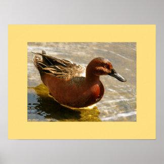 Fotografi för djur för ankafågeldjurliv poster