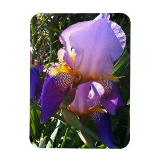 Fotomagnet - purpurfärgad Iris Magnet
