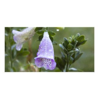 Foxgloves med dagg hälsningskort med foto
