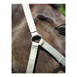Fragment av en häst huvud med ett nära övre för brevhuvud